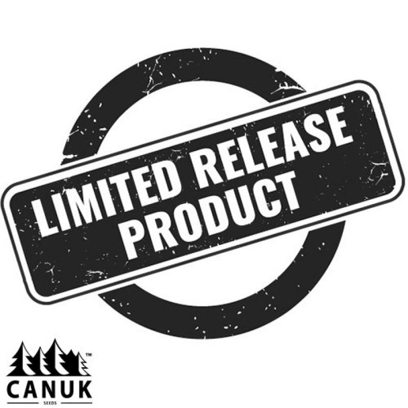Widow Bruce Regular Seeds *Limited Release* (Canuk Seeds)