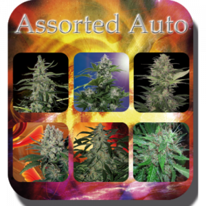 Assorted AUTO FEMINIZED Mix (Buddha Seeds)