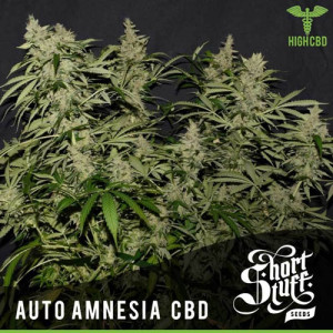 AUTO Amnesia CBD FEMINIZED Seeds (Shortstuff Seeds)