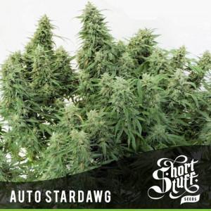 AUTO Stardawg FEMINIZED Seeds (Shortstuff Seeds)