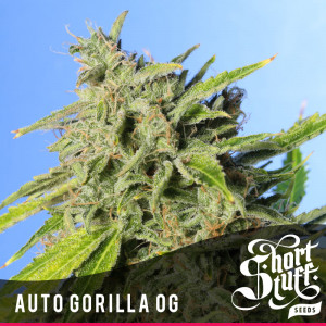 AUTO Gorilla OG FEMINIZED Seeds (Shortstuff Seeds)