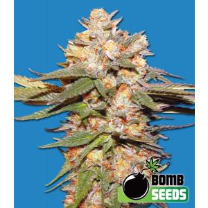 Big Bomb Autoflowering Feminized Seeds (Bomb Seeds)
