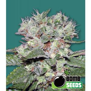 CBD Bomb Feminized Seeds (Bomb Seeds)