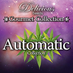 AUTOMATIC Gourmet Collection - Strains #1 (Delicious Seeds)