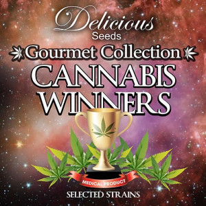 Feminized Gourmet Collection - Cannabis Winners #1 (Delicious Seeds)