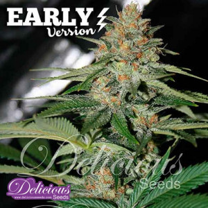 Delicious Candy Early Version FEMINIZED Seeds (Delicious Seeds)