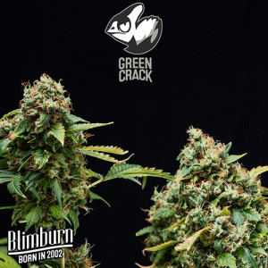 Green Crack FEMINIZED Seeds (BlimBurn Seeds)