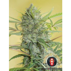 Happiness Feminized Seeds (Serious Seeds)