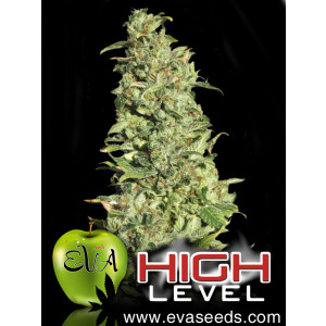 High Level FEMINIZED Seeds (EVA Seeds)