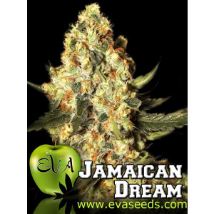 Jamaican Dream FEMINIZED Seeds (EVA Seeds)