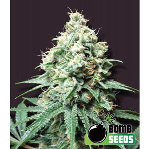 Kush Bomb Feminized Seeds (Bomb Seeds)