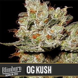OG's Kush Feminized Seeds (BlimBurn Seeds)