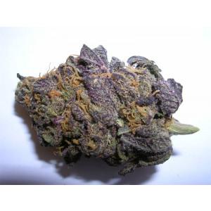 BC Purple Star REGULAR Seeds (BC Bud Depot)