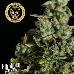 Santa Muerte Feminized Seeds (BlimBurn Seeds)