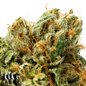Shiskaberry Feminized Seeds (Canuk Seeds)