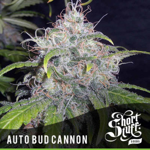 AUTO Bud Cannon FEMINIZED Seeds (Shortstuff Seeds)