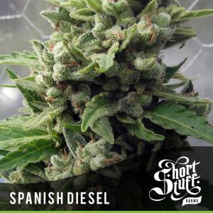 AUTO Spanish Diesel FEMINIZED Seeds (Shortstuff Seeds)