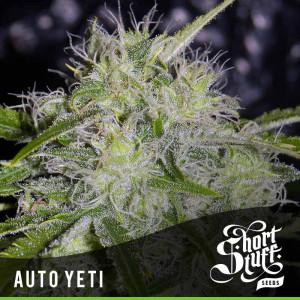 AUTO Yeti FEMINIZED Seeds (Shortstuff Seeds)