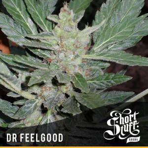 Dr.Feelgood AUTOFLOWERING REGULAR Seeds (Shortstuff Seeds)