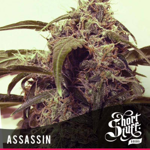 AUTO Assasin FEMINIZED Seeds (Shortstuff Seeds)