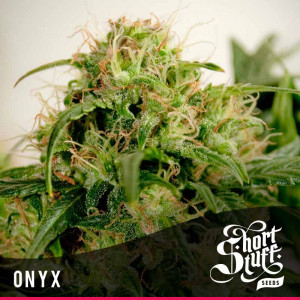 Onyx AUTOFLOWERING FEMINIZED Seeds (Shortstuff Seeds)