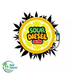 Auto Sour Diesel FEMINIZED Seeds (Oasis Genetics)