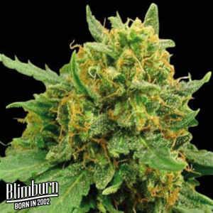 Superautomatic Feminized Seeds (BlimBurn Seeds)