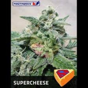 Supercheese Feminized Seeds (Positronics Seeds)