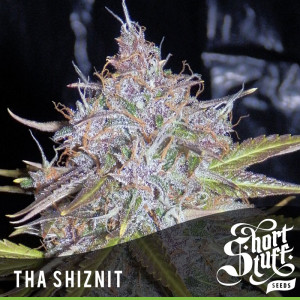 AUTO Tha Shiznit FEMINIZED Seeds (Shortstuff Seeds)